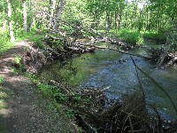 downed trees near towpath